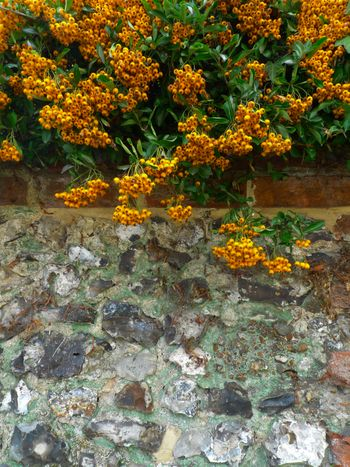 ... tall flint walls and mature shrubs which offer many lovely time-honoured ...
