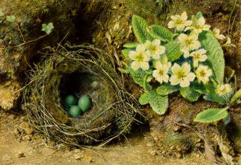 William Henry Hunt Primroses and Bird's Nest